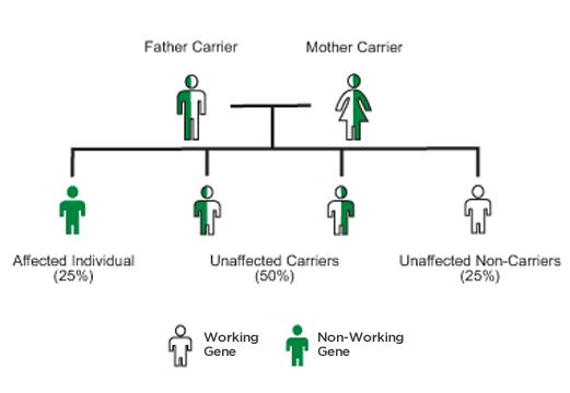 Autosomal-recessive-inheritance